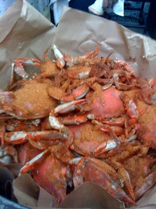 Steamed crabs at the hungry cat.