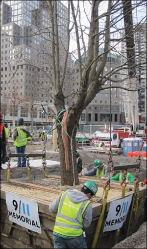 The 9/11 Tree